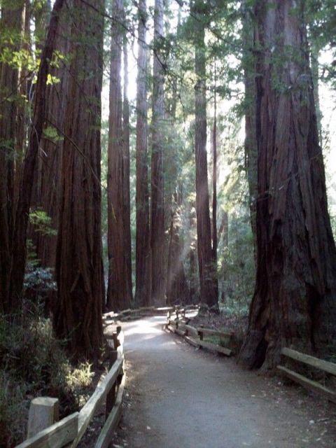 muir woods-6