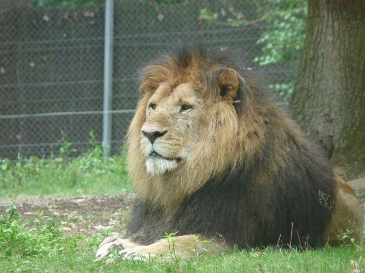 Au zoo de Thoiry
